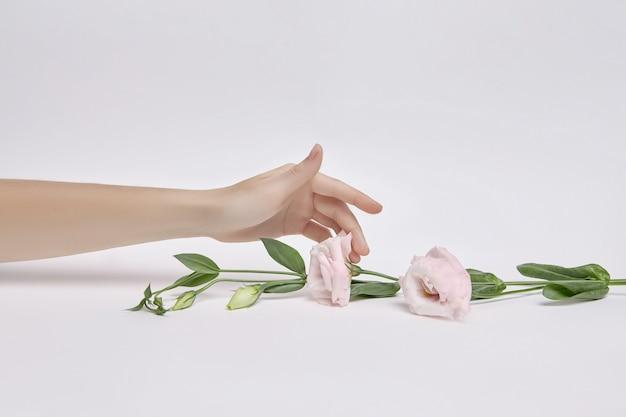 그녀의 손에 핑크 꽃과 아름다움 여자입니다. 손 피부 관리를 위한 천연 화장품. 손 보습 및 주름 개선 및 안티에이징 트리트먼트