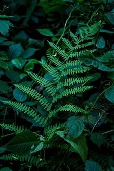 Красивые папоротники листья зеленая листва естественный цветочный фон папоротника в солнечном свете. обои естественный фон. крупный план листьев папоротника