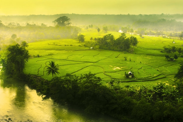 Beautyful in at fields kemumu north bengkulu indonesia