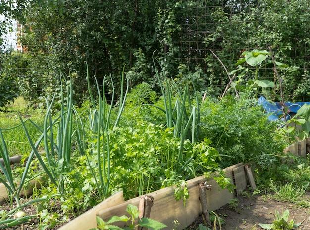 庭の玉ねぎとベッド
