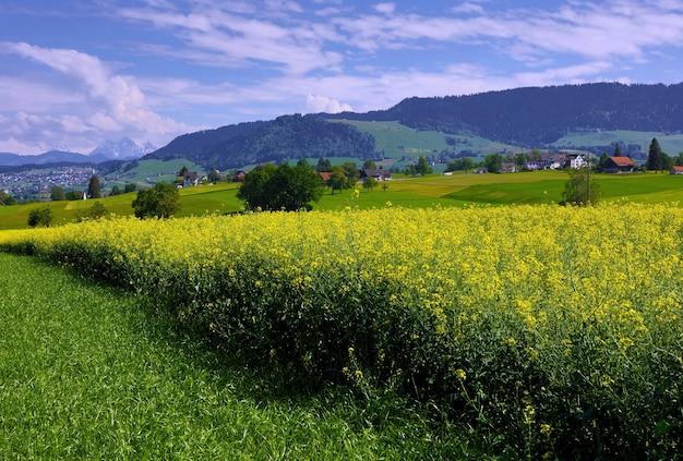 Letto di fiori gialli con petali