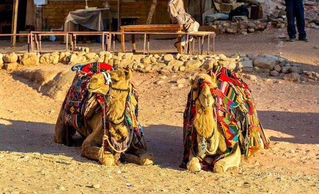 ベドウィンのラクダは、ヨルダンのペトラの古代都市で休んでいます