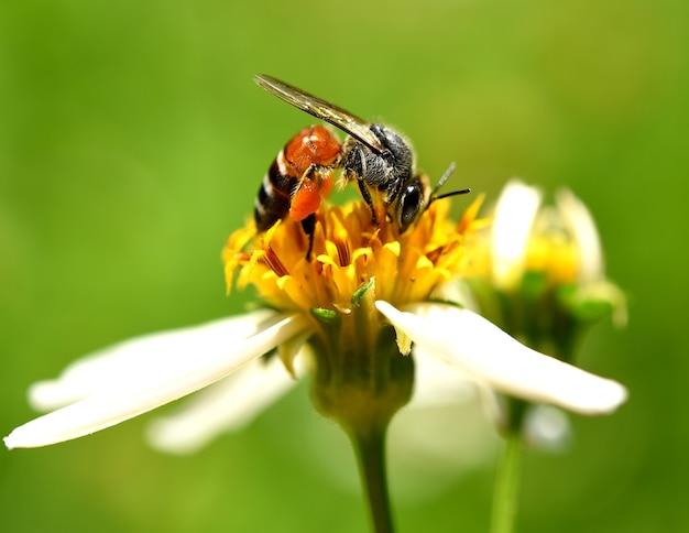 庭の蜂と花