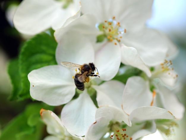 직장에서 꿀벌