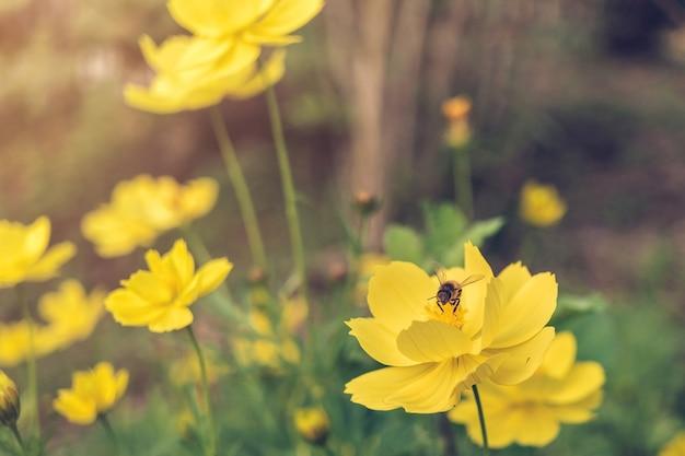 A bee find honeydew in the pollen of flower