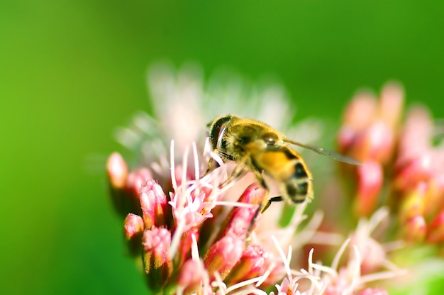 Bee on a flowers