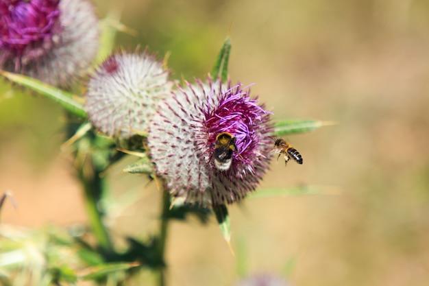 蜂が飛んで凝灰岩の植物を食べる。自然の概念の昆虫