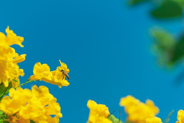 Bee flying around yellow flower in blue sky