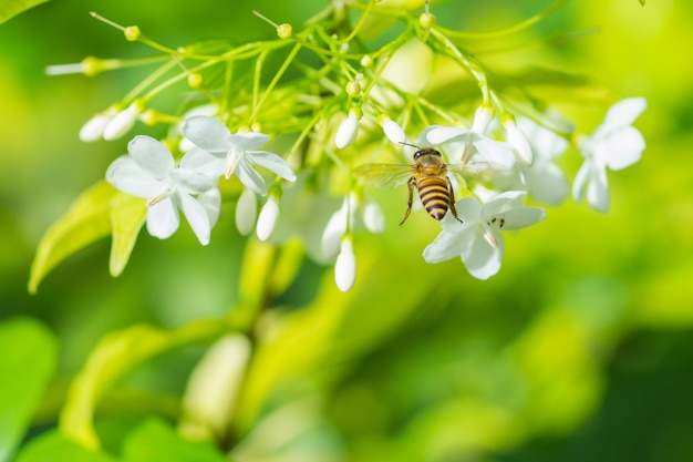 A bee flying to the beautiful flower.