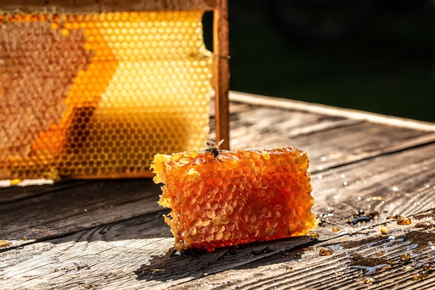 Bee flying, honeycombs with full cells of honey with wooden honey dipper on wooden table