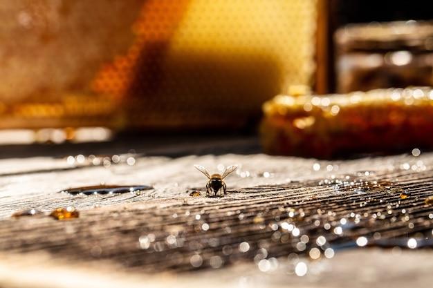 벌 꿀의 전체 세포와 넓어짐에 비행 꿀벌