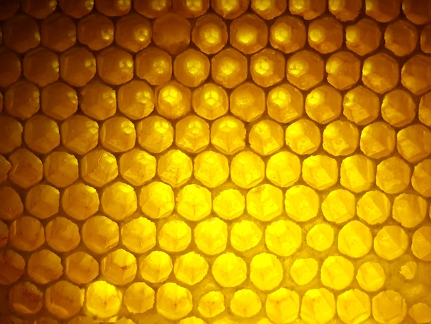 Bee fresh honey in combs. background and texture. vitamin natural food. bee work product