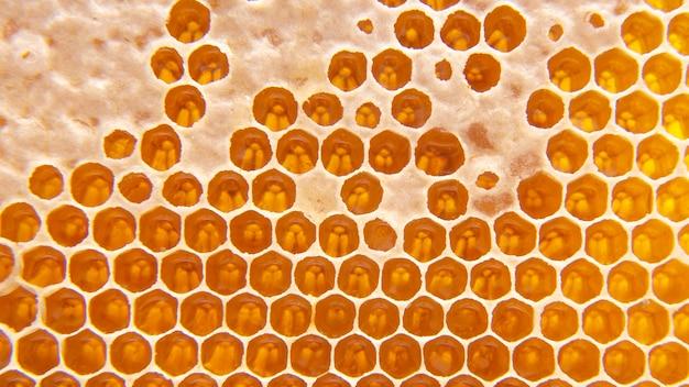 빗에 꿀벌 신선한 꿀. 배경과 텍스처입니다. 비타민 자연 식품. 꿀벌 작업 제품