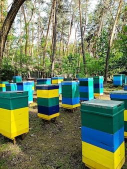 ミツバチの巣箱は色とりどりで、森の中に立って、森の花から蜂蜜を集めています。