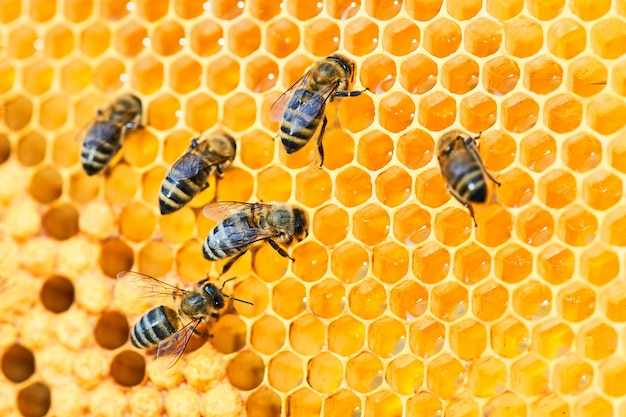 Bee hive on a honeycomb