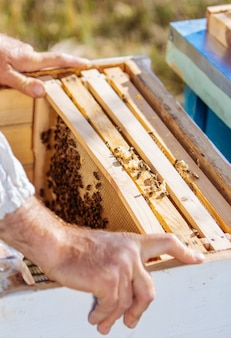 Пчелиный улей в уходе за пчелами с сотами и медоносными пчелами. пчеловод открыл улей, чтобы установить пустую рамку с воском для сбора меда.