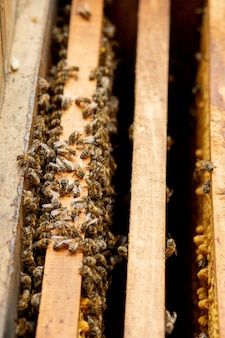 Bee hives in care of bees with honeycombs and honey bees. beekeeper opened hive to set up an empty frame with wax for honey harvesting.