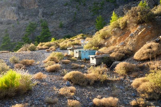 夕暮れ時に山岳地帯で蜂の巣箱