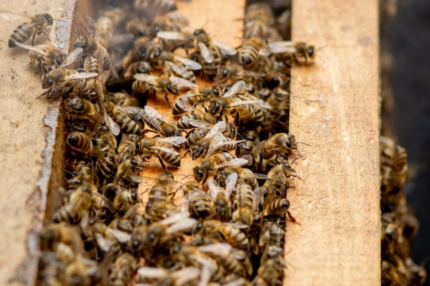 Пчелиные ульи в уходе за пчелами с сотами и медоносными пчелами