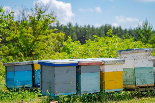 Пчелиные ульи на лугу в сельской местности. пасека. мед и пчелы.