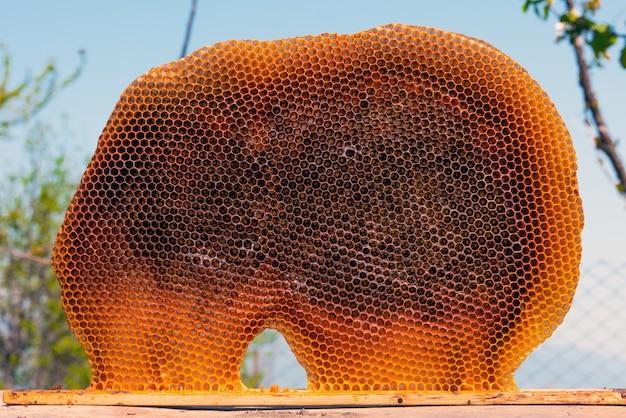 Пчелиные соты на пасеке