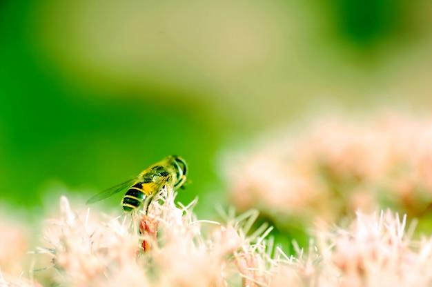 흐림 배경에서 꿀벌