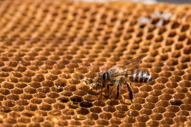 The bee is on the honeycomb.