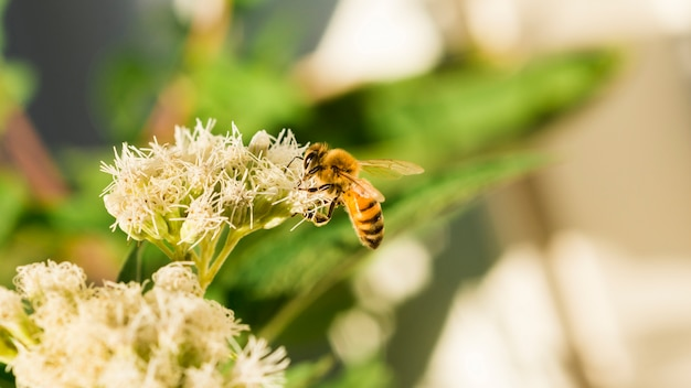 Пчела ищет пыльцу