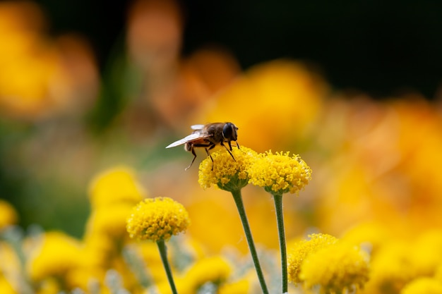 小さな黄色い花の上に横たわる蜂