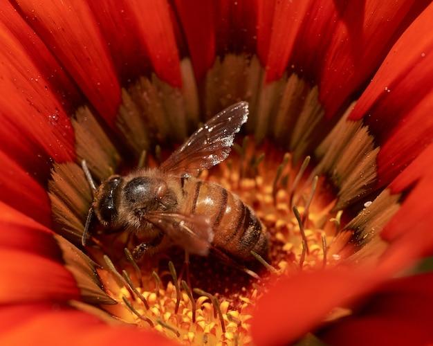 Bee macro flower orange insect pollen