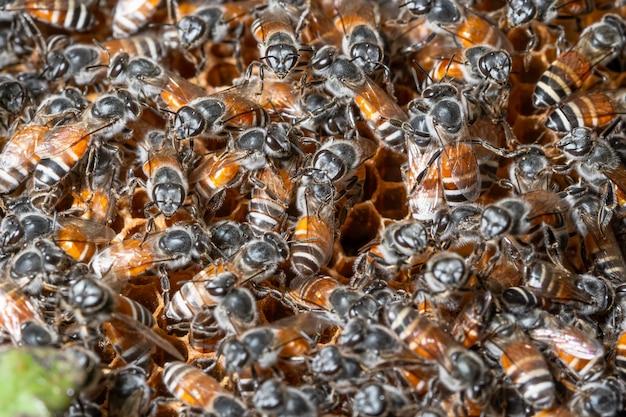 Bee macro at nest
