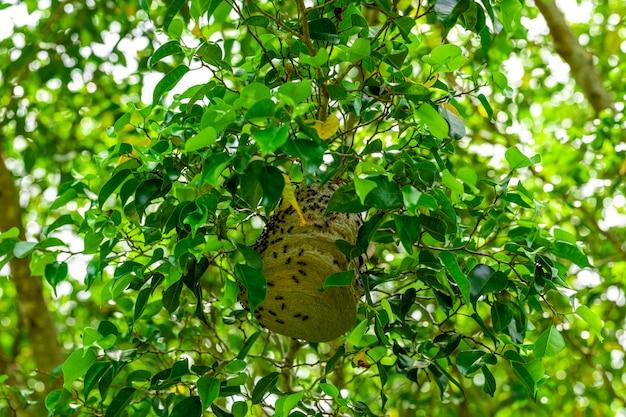 Пчелиное гнездо посреди листьев