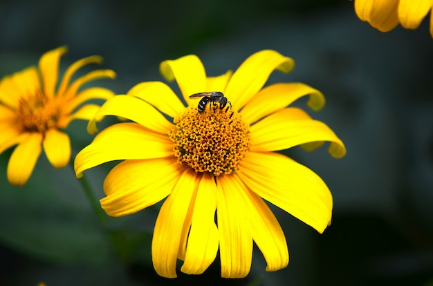 花粉を集めて蜂蜜を作る花に蜂