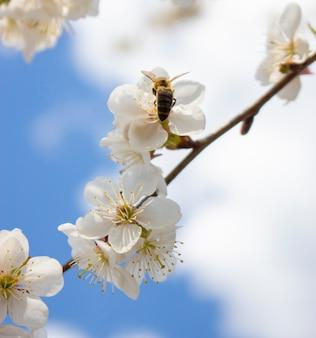 하늘 표면에 꽃에 꿀벌