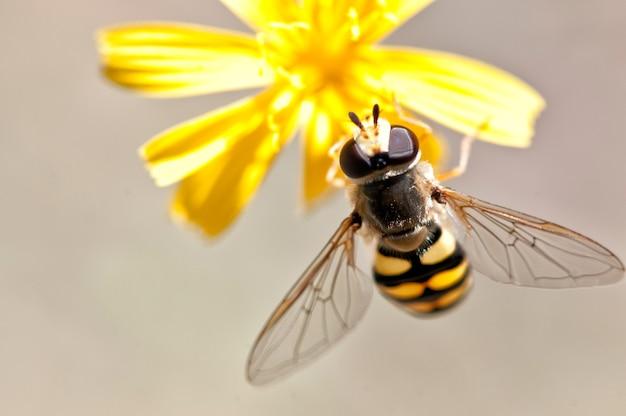 꽃에 꿀벌