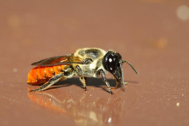 茶色の背景に蜂