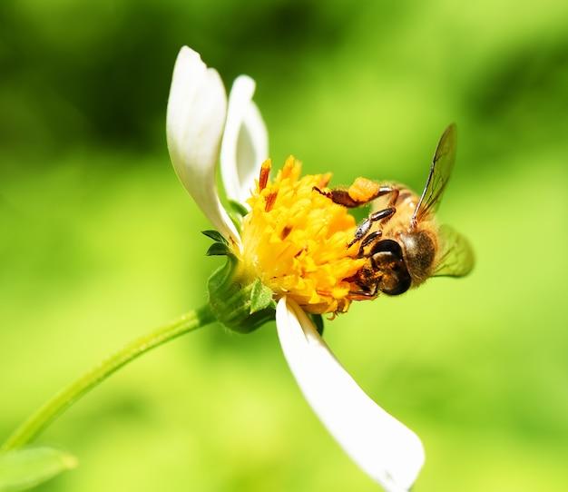 緑の背景の上に花の蜂