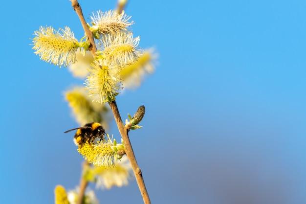 하늘 위에 꽃에 꿀벌