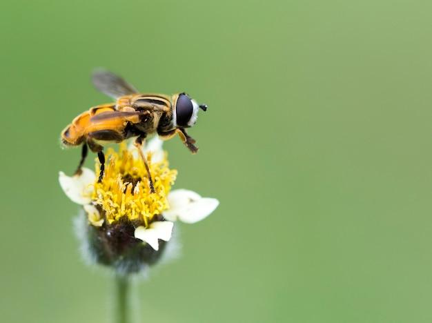小さな花のクローズアップの蜂