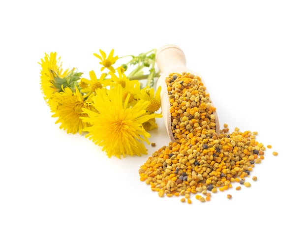 Bee pollen or perga isolated