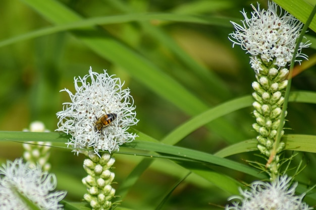 蜂は夏の庭で花を花粉症にします