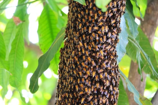 蜂製品は栄養価の高いサプリメントです