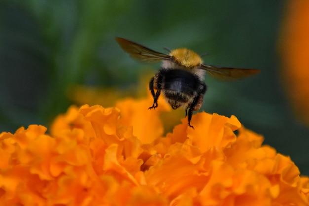 蜂は花の上に座っています