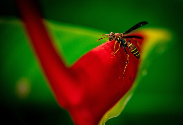 庭の真っ赤な花の上に座っている蜂