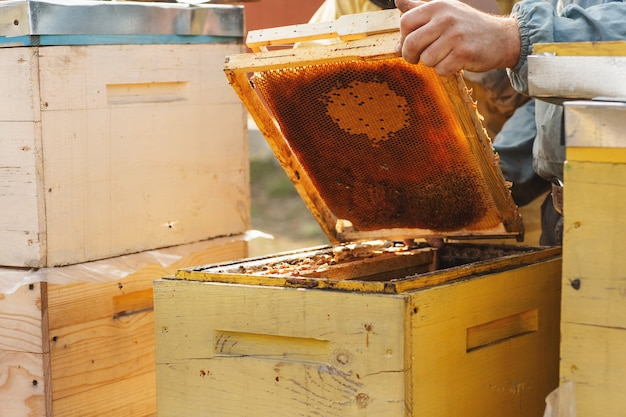 The bee smoker is used to calm bees before frame removal