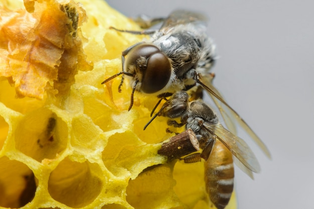 Bee take care of honeycomb