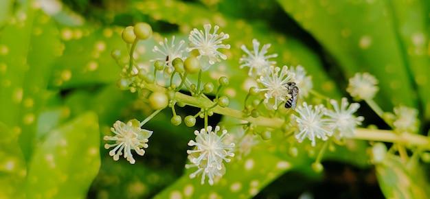 緑の背景に小さな花と蜂