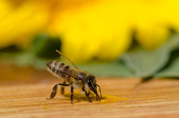 Bee on a wooden table outside in the garden