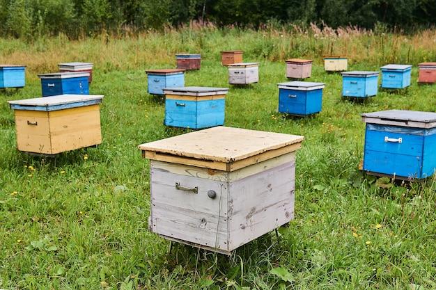 Пчелиный двор на лесной поляне с красочными деревянными ульями