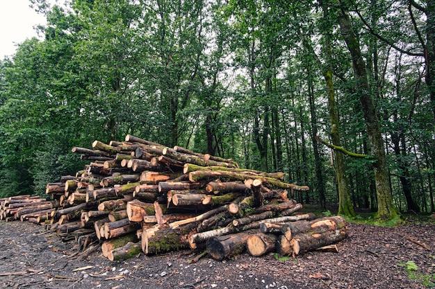 自然に倒れた木から切り取ったブナの丸太で、薪に使われます。